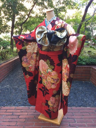 赤 黒 菊